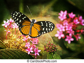 Pretty Butterfly - Close up photo of a pretty orange and...