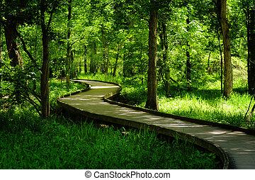 Winding Woodland Boardwalk - A winding boardwalk in...
