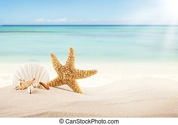 Sandy beach with blank paper for text - Concept of summer...