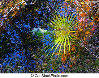 Reflection in Water Corkscrew Swamp Sanctuary Audubon Naples...