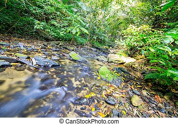 Stream river in rain forest