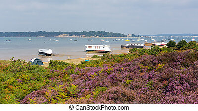 Purple heather view to Brownsea uk - Purple heather with...
