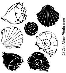 silueta, de, Conchas marinas,