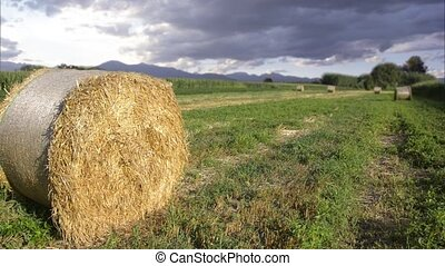hay bales - Agriculture, farmland Landscape with hay bales
