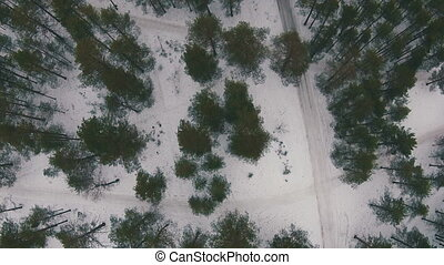 Flying Above Winter Forest in Cloudy Weather