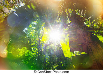 Jungle - jungle in Mexico