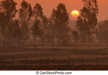 ASIA THAILAND ISAN AMNAT CHAROEN - a ricefield a sunset in...