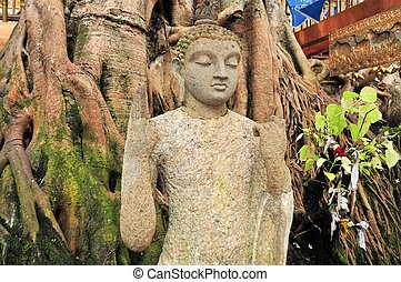 Buddha under a Bodhi Tree in Colombo Sri Lanka - Buddha...