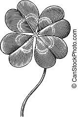 clover - Engraved illustration of four leaf clover