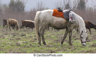 Horse and Cows
