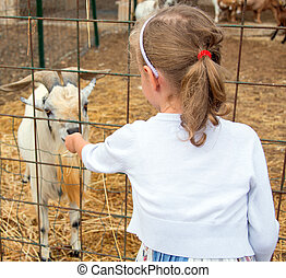 Little girl feeding goat on the farm.