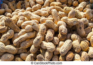Pile of Monkey Nuts - Monkey nuts for sale - crack the...