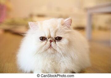 イラン人, ネコ