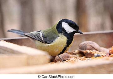 Great tit in birdfeeder in the park
