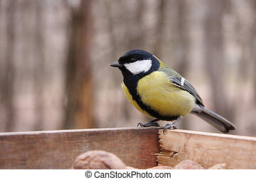 Great tit in birdfeeder in the park