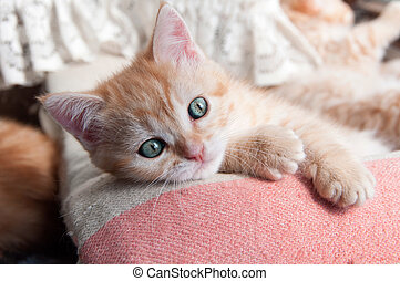 red kitten with green eyes lying on the bedspread