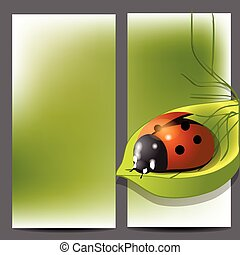 template for brochure with ladybug