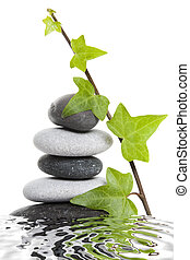 Pebble Stack and Ivy - Stack of pebbles with water...