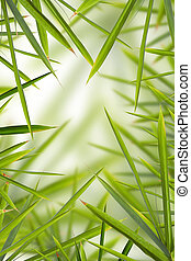 Bamboo Shhot Backround - Nice background made of lots of...