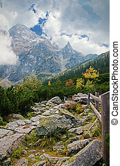 Tatra Mountains - Beautiful forest landscape in the Tatra...