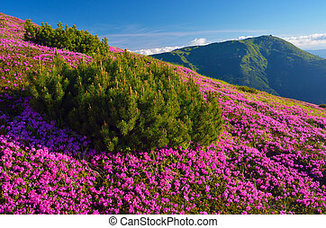 zomer, landscape, met, Bloemen,