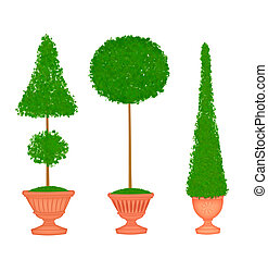 Three Topiaries in Terra Cotta Urns - Three pretty clipped...
