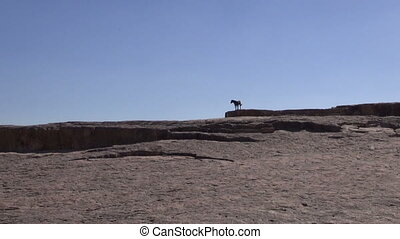 lonely black dog silhouette on rock