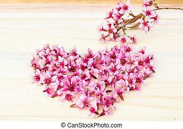 beautiful Thai sakura cherry blossoms background