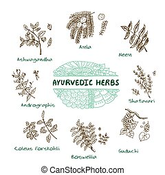 Ayurvedic herbs collection - Handdrawn Set - Health and...