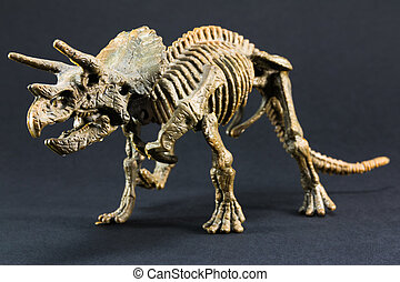 Triceratops fossil dinosaur skeleton model toy on black...