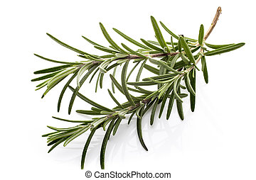 Rosemary - Rosemary twig on the isolated white background
