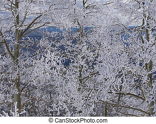 Snowy Trees - A light dusting of snow over the trees.