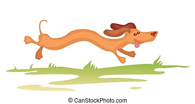 dachshund running - Cheerful funny dachshund puppy is...