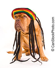 Rastafarian Hat Dog - Funny Dog in Rastafarian Hat with...