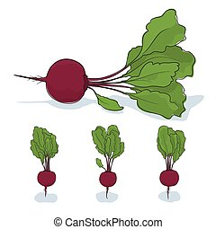 Beet root vegetable on a white background - Beetroot, three...