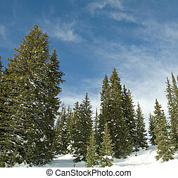 snow covered trees - Snow covered trees high in the...