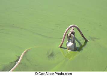 Blue-Green Algae Bloom - An anchor sits in shallow water,...