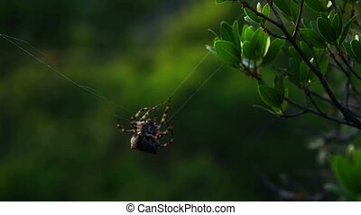 Spider repairing web and waiting on his web for bug
