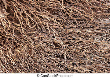 Exposed root system of a palm tree