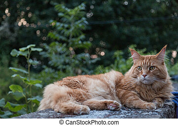 ginger cat on wall