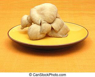 Oyster mushrooms on ceramic plate on orange