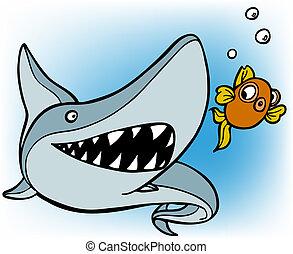 shark chasing goldfish - isolated on a white background