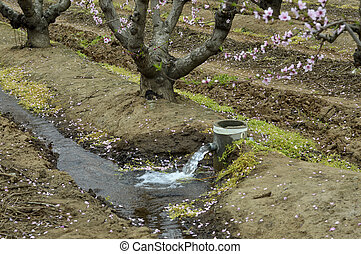 Watering fields - Watering the fields of fruit trees on the...