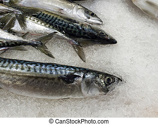 Fresh fish preserved in ice