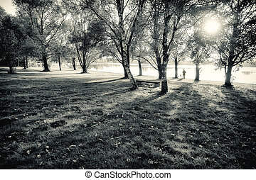 Park at Sunset in Black and White