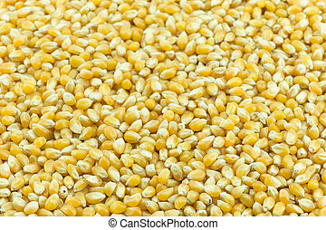 Yellow grain corn  - Close up yellow grain corn background