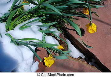 Smashed by Snow - Garden flowers are beaten down after snow...