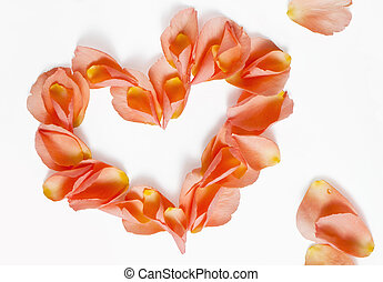 rose petals heart shape - orange rose petals on the white...