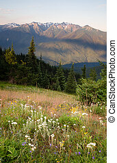 Early Morning Light Wildflower Meadow Olympic Mountains Hurrican