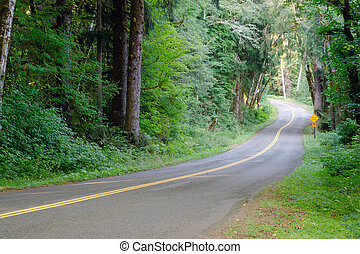 Two Lane Road Cuts Through Dense Tree Canopy Hoh Rainforest...